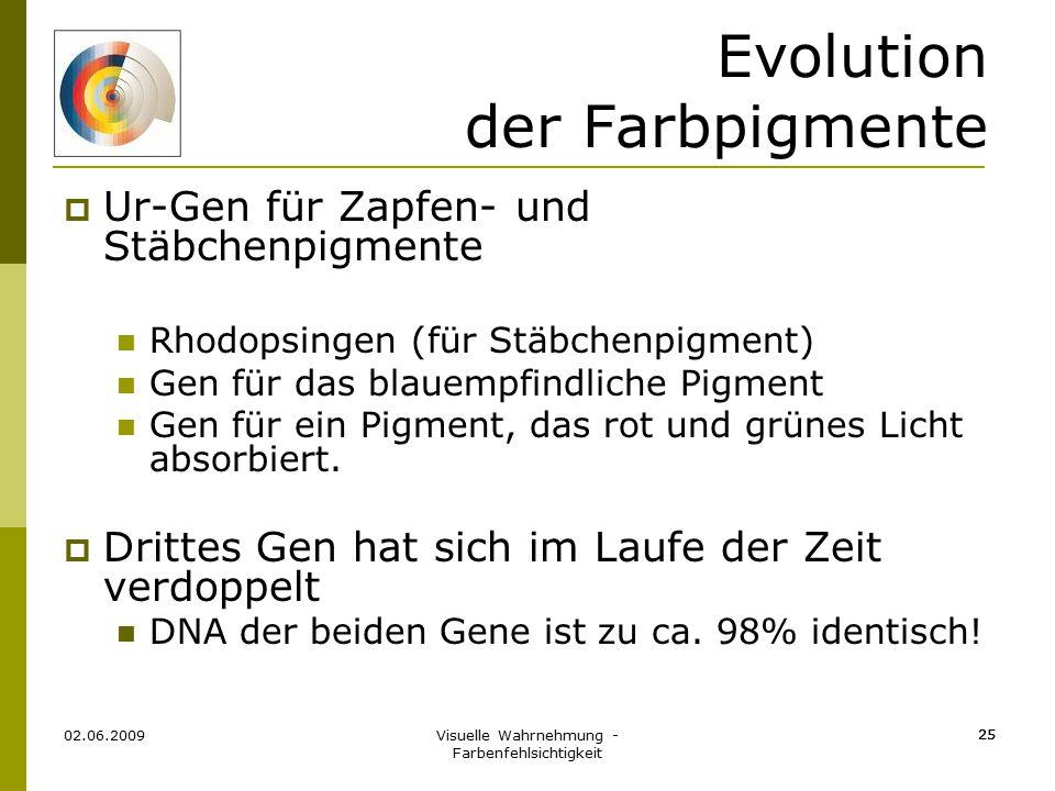 Visuelle Wahrnehmung - Farbenfehlsichtigkeit 25 Evolution der Farbpigmente  Ur-Gen für Zapfen- und Stäbchenpigmente Rhodopsingen (für Stäbchenpigment