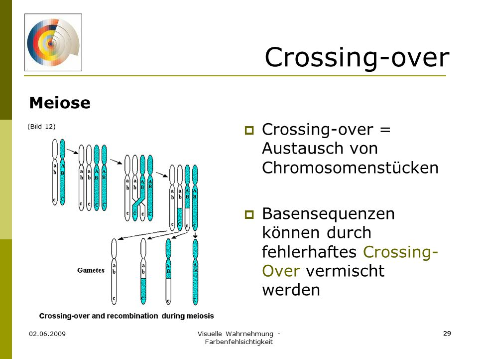 Visuelle Wahrnehmung - Farbenfehlsichtigkeit 29 Crossing-over Meiose 02.06.2009 29  Crossing-over = Austausch von Chromosomenstücken  Basensequenzen