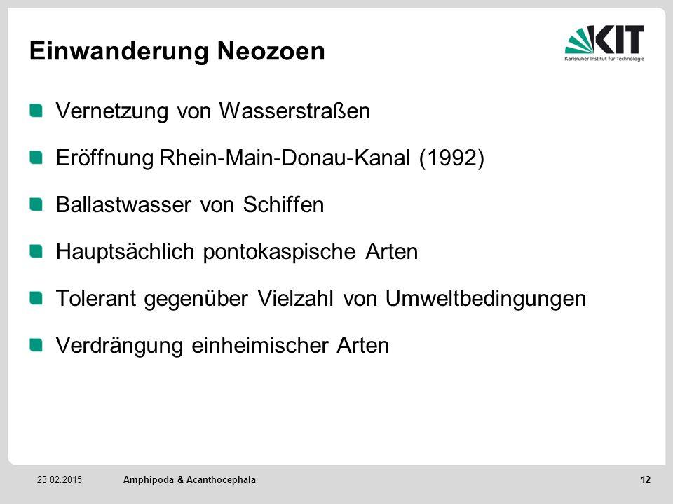 23.02.2015 Einwanderung Neozoen Vernetzung von Wasserstraßen Eröffnung Rhein-Main-Donau-Kanal (1992) Ballastwasser von Schiffen Hauptsächlich pontokas