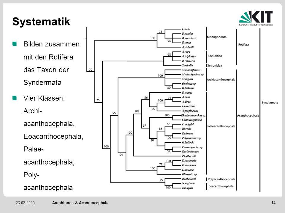 23.02.2015 Systematik Bilden zusammen mit den Rotifera das Taxon der Syndermata Vier Klassen: Archi- acanthocephala, Eoacanthocephala, Palae- acanthoc