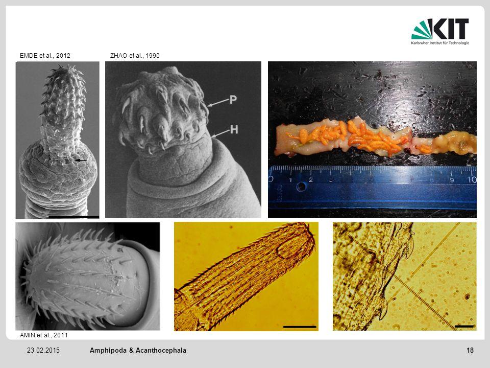 23.02.2015Amphipoda & Acanthocephala EMDE et al., 2012ZHAO et al., 1990 AMIN et al., 2011 18