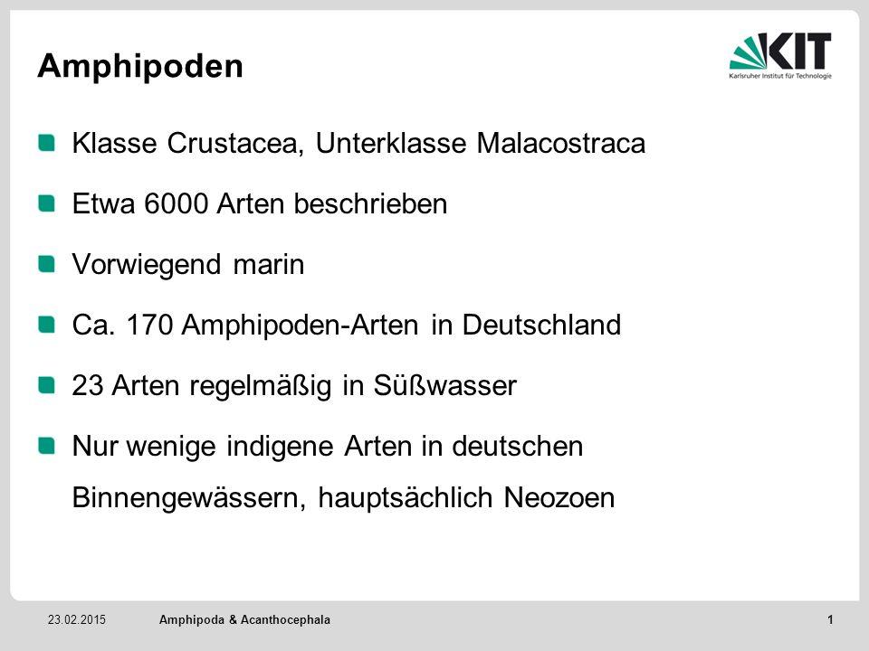 23.02.2015 Amphipoden Klasse Crustacea, Unterklasse Malacostraca Etwa 6000 Arten beschrieben Vorwiegend marin Ca. 170 Amphipoden-Arten in Deutschland