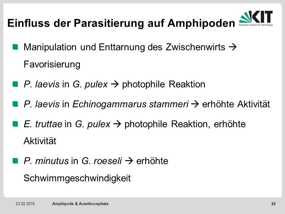 23.02.2015 Einfluss der Parasitierung auf Amphipoden Manipulation und Enttarnung des Zwischenwirts  Favorisierung P. laevis in G. pulex  photophile