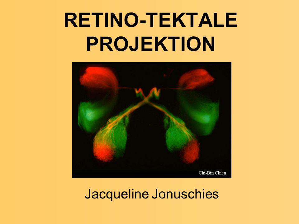 RETINO-TEKTALE PROJEKTION Jacqueline Jonuschies