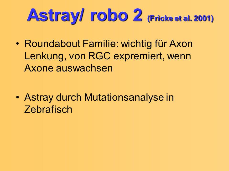 Astray/ robo 2 (Fricke et al. 2001) Roundabout Familie: wichtig für Axon Lenkung, von RGC expremiert, wenn Axone auswachsen Astray durch Mutationsanal