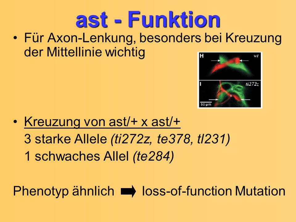 ast - Funktion Für Axon-Lenkung, besonders bei Kreuzung der Mittellinie wichtig Kreuzung von ast/+ x ast/+ 3 starke Allele (ti272z, te378, tl231) 1 sc