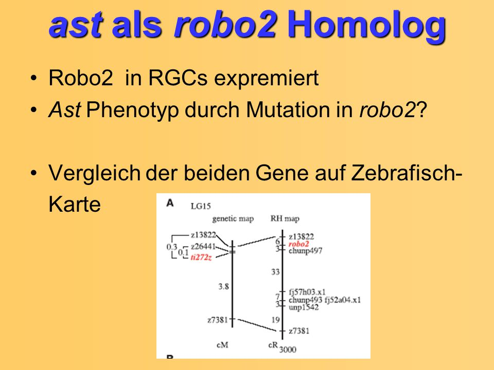 ast als robo2 Homolog Robo2 in RGCs expremiert Ast Phenotyp durch Mutation in robo2.