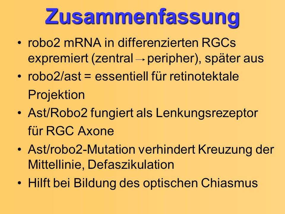 Zusammenfassung robo2 mRNA in differenzierten RGCs expremiert (zentral peripher), später aus robo2/ast = essentiell für retinotektale Projektion Ast/R