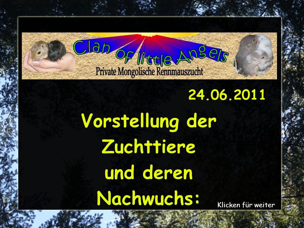 Vorstellung der Zuchttiere und deren Nachwuchs: Klicken für weiter 24.06.2011
