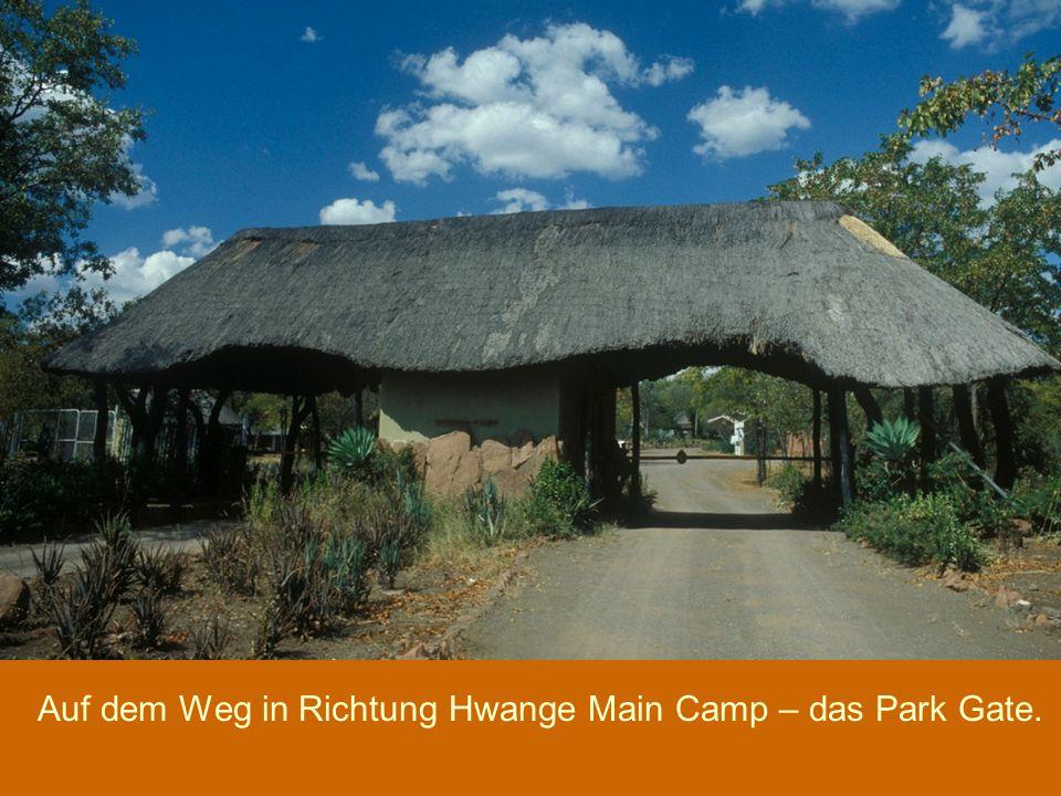 Auf dem Weg in Richtung Hwange Main Camp – das Park Gate.