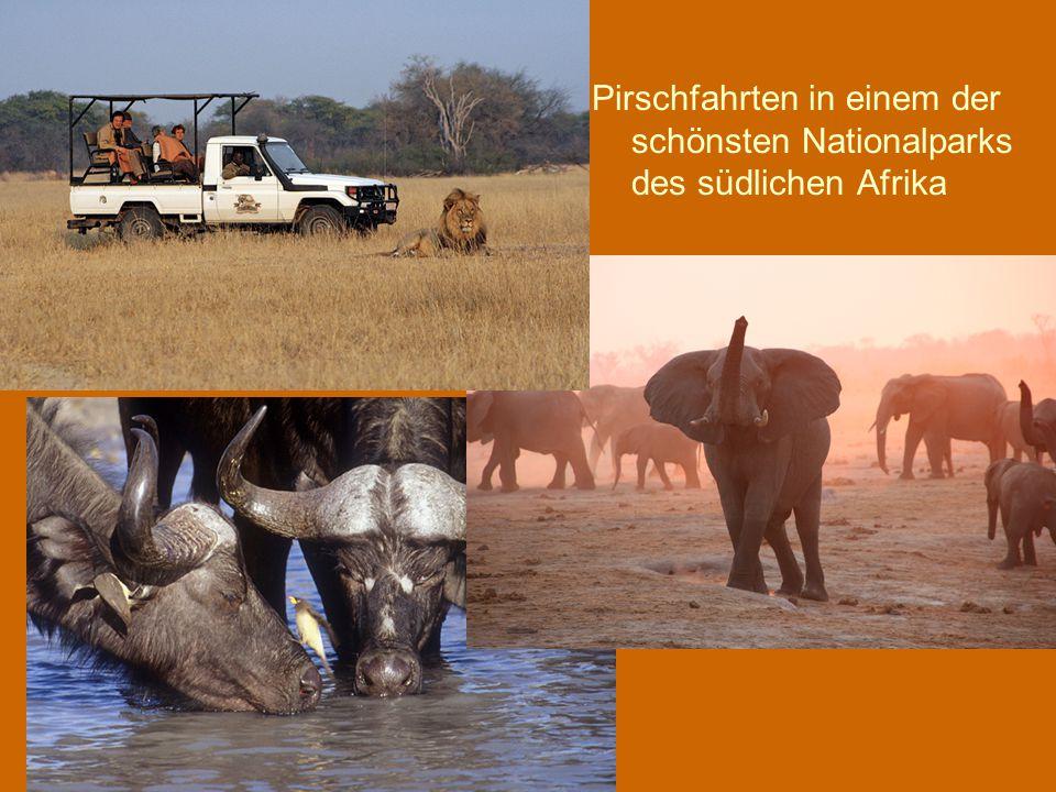 Pirschfahrten in einem der schönsten Nationalparks des südlichen Afrika