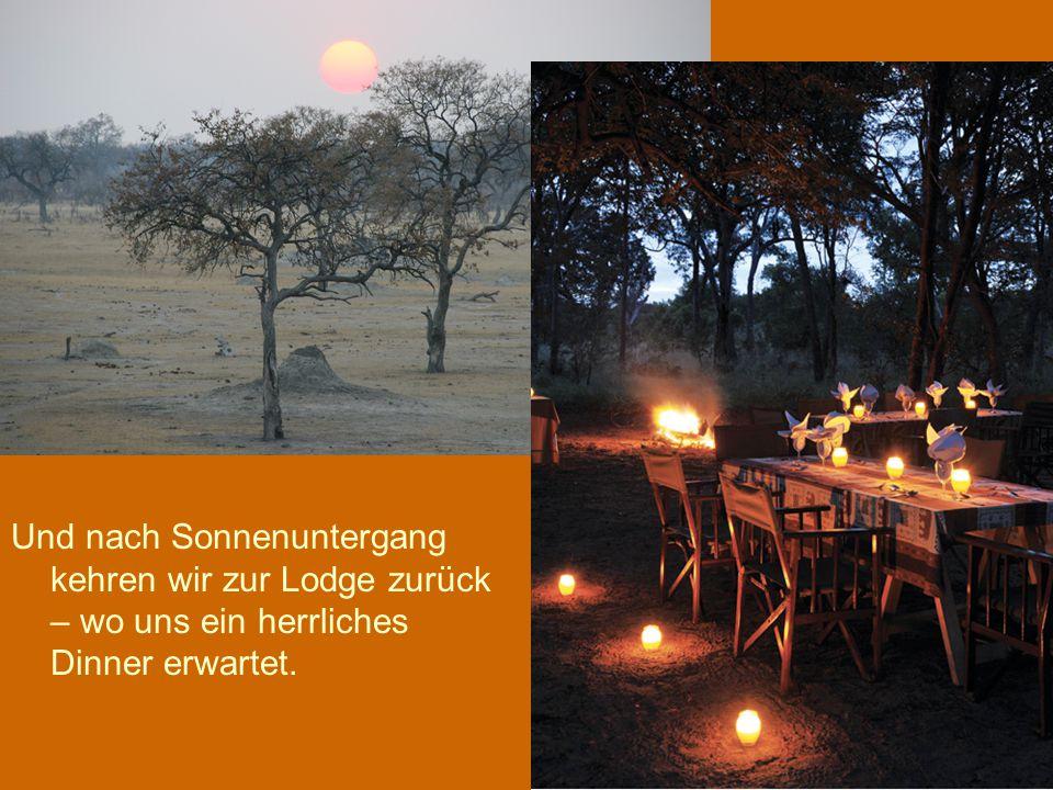 Und nach Sonnenuntergang kehren wir zur Lodge zurück – wo uns ein herrliches Dinner erwartet.