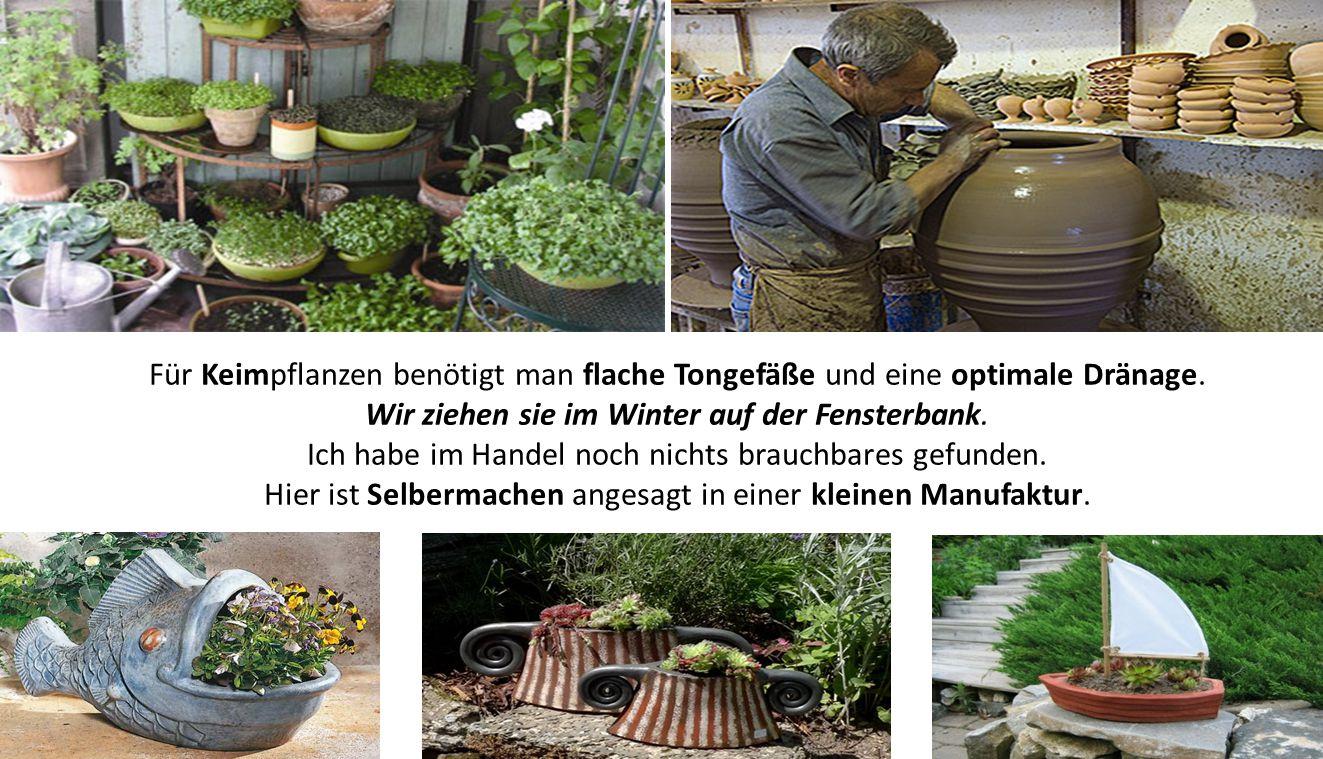 Für Keimpflanzen benötigt man flache Tongefäße und eine optimale Dränage. Wir ziehen sie im Winter auf der Fensterbank. Ich habe im Handel noch nichts