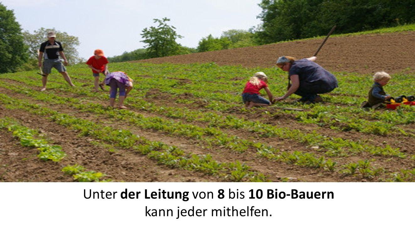 Unter der Leitung von 8 bis 10 Bio-Bauern kann jeder mithelfen.