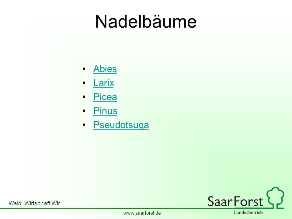 www.saarforst.de Wald. Wirtschaft Wir. Nadelbäume Abies Larix Picea Pinus Pseudotsuga