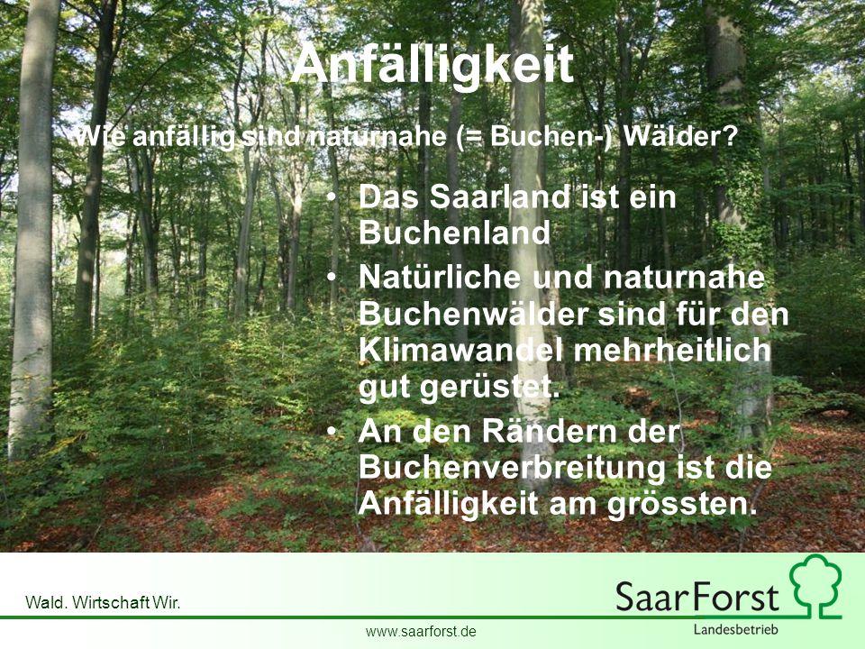 www.saarforst.de Wald. Wirtschaft Wir. Anfälligkeit Das Saarland ist ein Buchenland Natürliche und naturnahe Buchenwälder sind für den Klimawandel meh