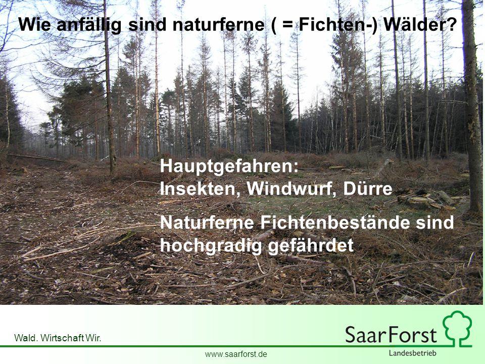 www.saarforst.de Wald. Wirtschaft Wir. Wie anfällig sind naturferne ( = Fichten-) Wälder? Hauptgefahren: Insekten, Windwurf, Dürre Naturferne Fichtenb