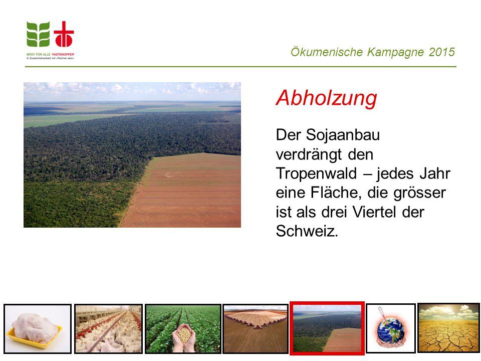 Ökumenische Kampagne 2015 Abholzung Der Sojaanbau verdrängt den Tropenwald – jedes Jahr eine Fläche, die grösser ist als drei Viertel der Schweiz.