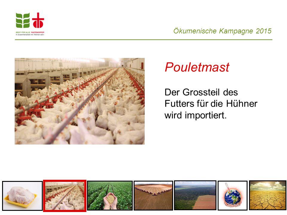 Ökumenische Kampagne 2015 Pouletmast Der Grossteil des Futters für die Hühner wird importiert.