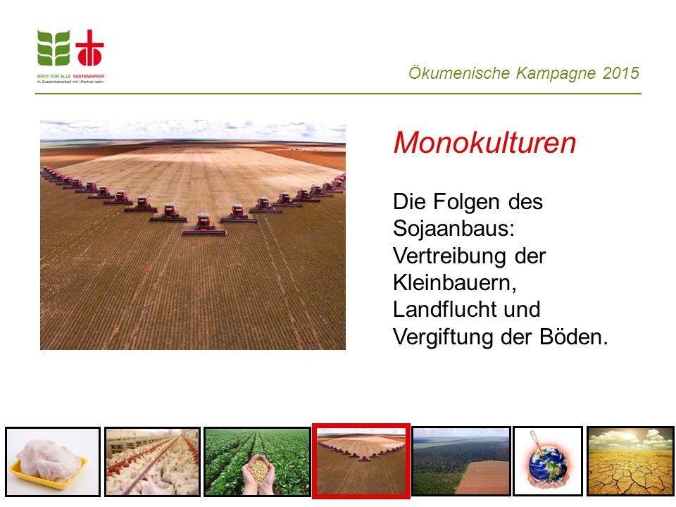Ökumenische Kampagne 2015 Monokulturen Die Folgen des Sojaanbaus: Vertreibung der Kleinbauern, Landflucht und Vergiftung der Böden.