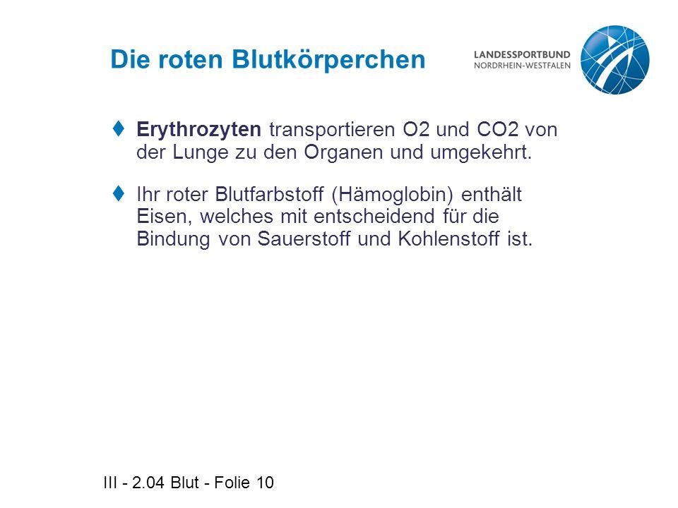 III - 2.04 Blut - Folie 10 Die roten Blutkörperchen  Erythrozyten transportieren O2 und CO2 von der Lunge zu den Organen und umgekehrt.  Ihr roter B
