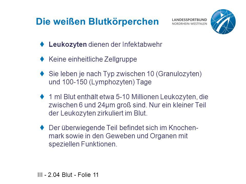 III - 2.04 Blut - Folie 11 Die weißen Blutkörperchen  Leukozyten dienen der Infektabwehr  Keine einheitliche Zellgruppe  Sie leben je nach Typ zwis