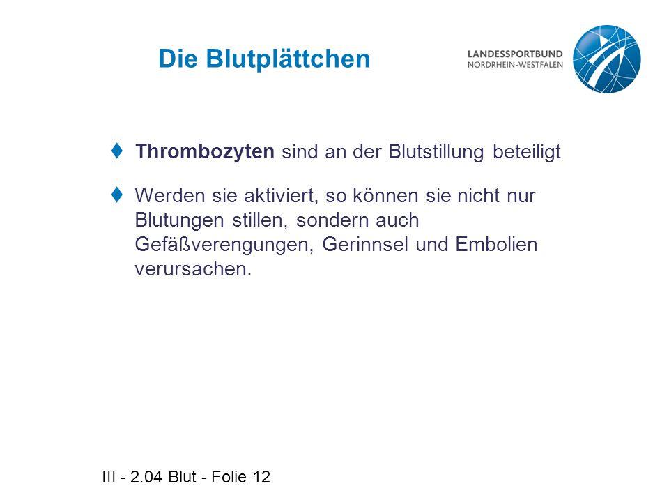 III - 2.04 Blut - Folie 12 Die Blutplättchen  Thrombozyten sind an der Blutstillung beteiligt  Werden sie aktiviert, so können sie nicht nur Blutung