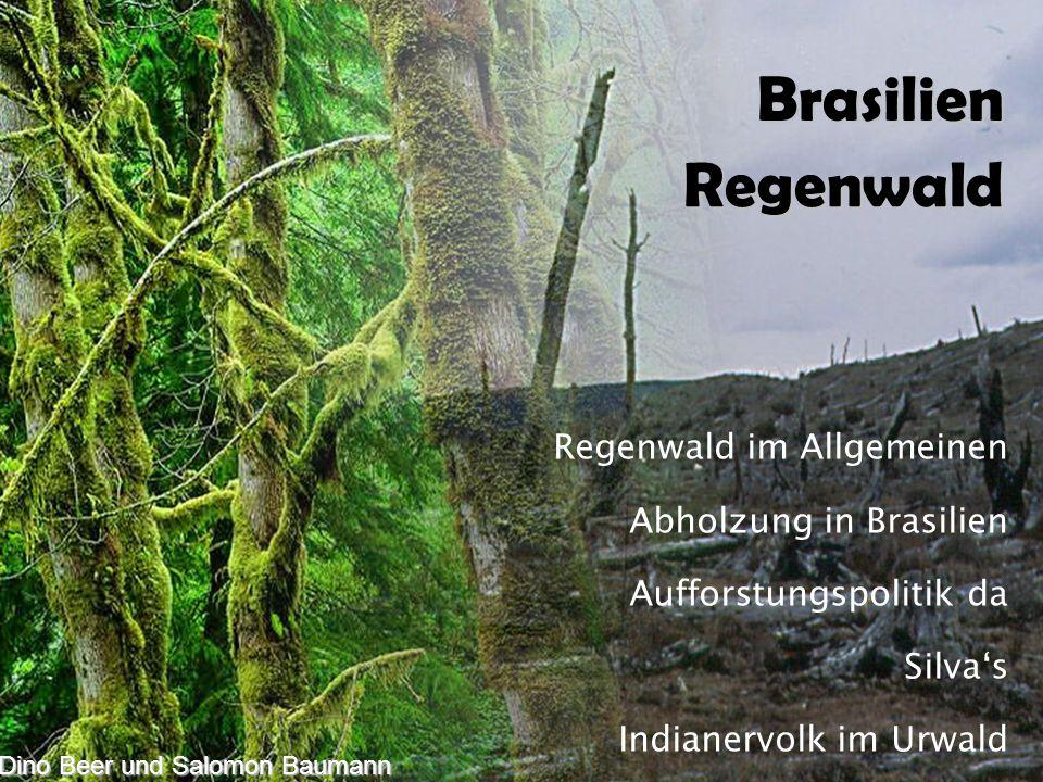 Dino Beer & Salomon Baumann Regenwald im Allgemeinen Abholzung in Brasilien Aufforstungspolitik da Silva's Indianervolk im Urwald Impressionen Dino Beer und Salomon Baumann Brasilien Regenwald