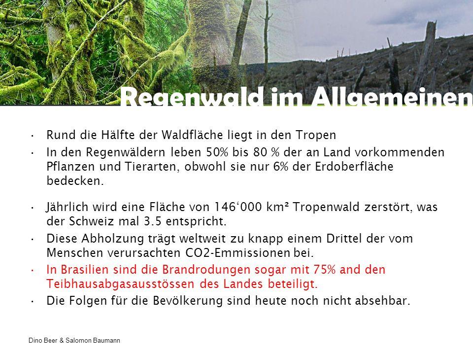 Dino Beer & Salomon Baumann Regenwald im Allgemeinen Rund die Hälfte der Waldfläche liegt in den Tropen In den Regenwäldern leben 50% bis 80 % der an Land vorkommenden Pflanzen und Tierarten, obwohl sie nur 6% der Erdoberfläche bedecken.