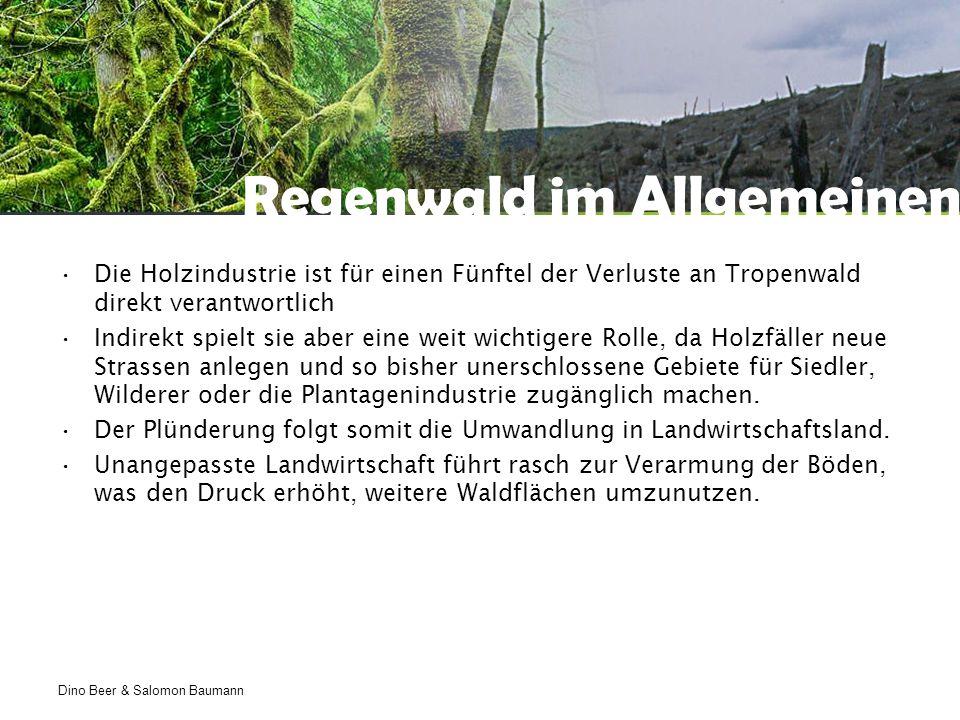 Dino Beer & Salomon Baumann Regenwald im Allgemeinen Die Holzindustrie ist für einen Fünftel der Verluste an Tropenwald direkt verantwortlich Indirekt spielt sie aber eine weit wichtigere Rolle, da Holzfäller neue Strassen anlegen und so bisher unerschlossene Gebiete für Siedler, Wilderer oder die Plantagenindustrie zugänglich machen.