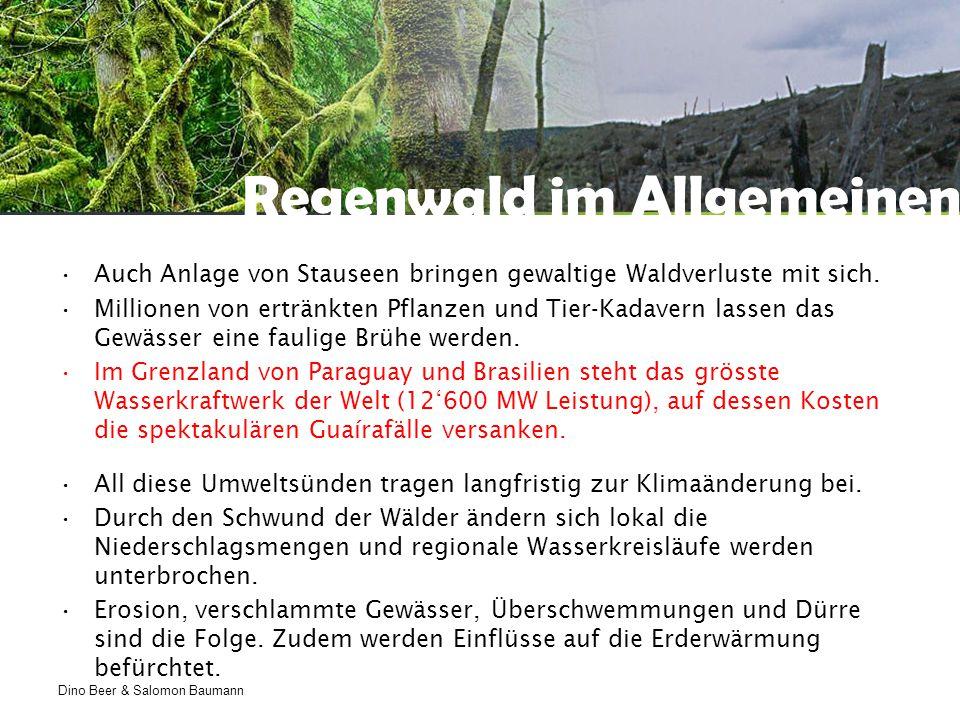 Dino Beer & Salomon Baumann Impressionen