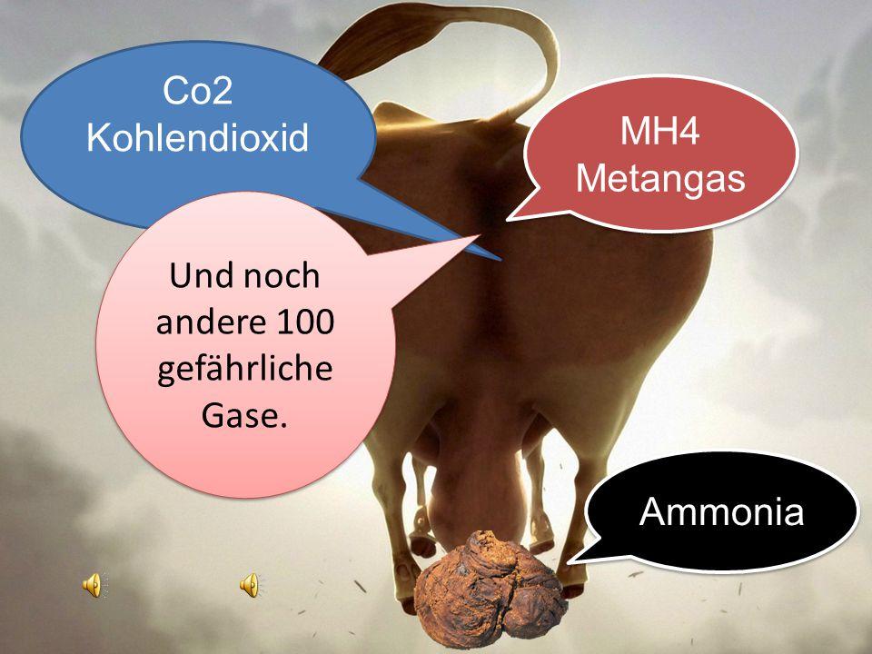 Co2 Kohlendioxid Co2 Kohlendioxid Metangas 100 gefährliche verschiedene Gase produziert eine Kuh Sie rülpst vorne und pfurzt hinten!