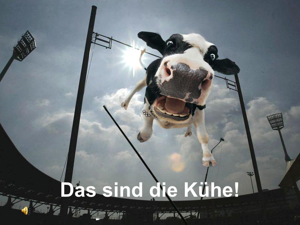 Das sind die Kühe!
