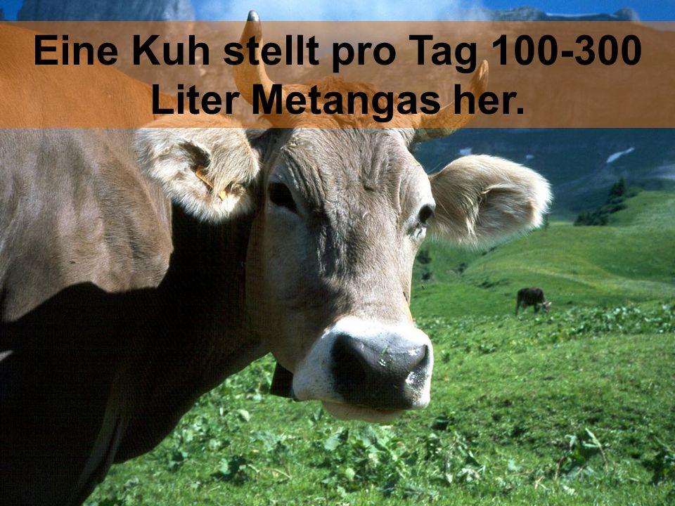 Eine Kuh stellt pro Tag 100-300 Liter Metangas her.