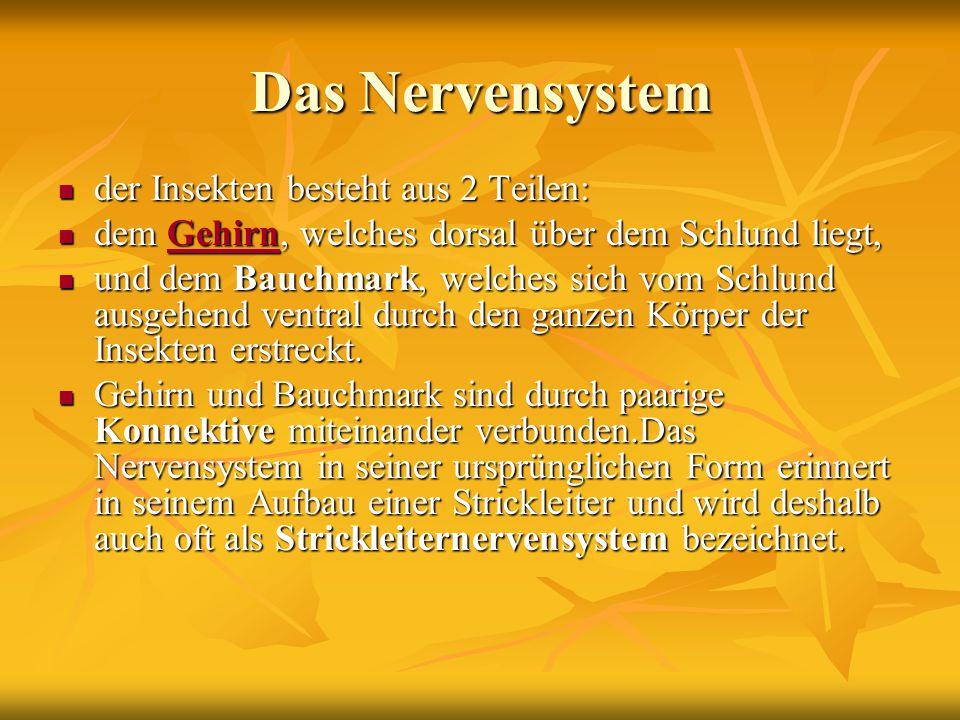 Das Nervensystem der Insekten besteht aus 2 Teilen: der Insekten besteht aus 2 Teilen: dem Gehirn, welches dorsal über dem Schlund liegt, dem Gehirn,
