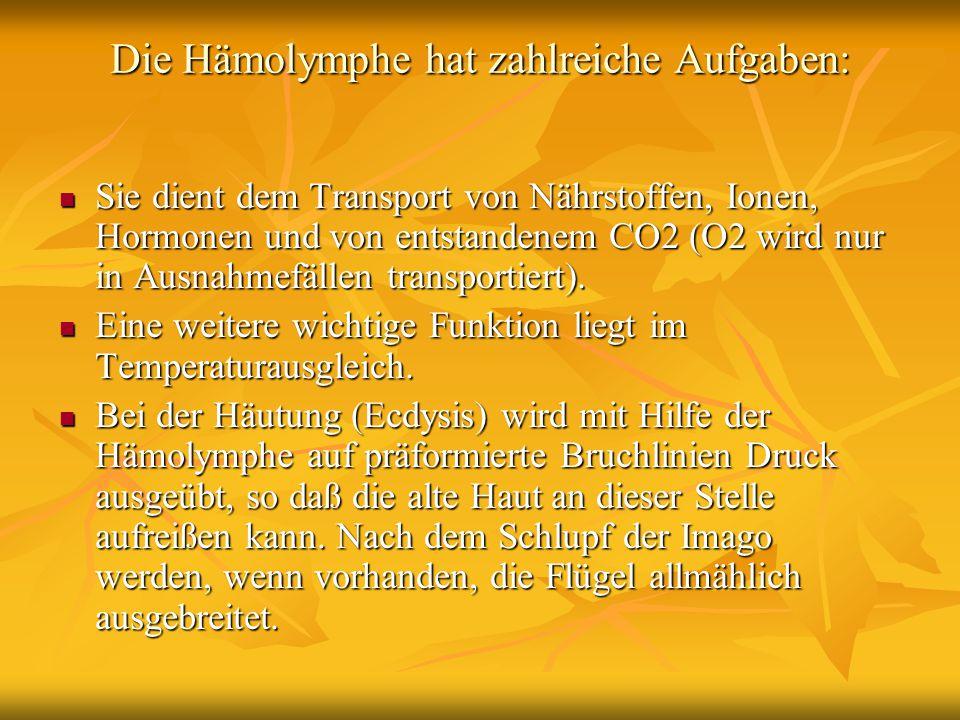 Die Hämolymphe hat zahlreiche Aufgaben: Sie dient dem Transport von Nährstoffen, Ionen, Hormonen und von entstandenem CO2 (O2 wird nur in Ausnahmefäll