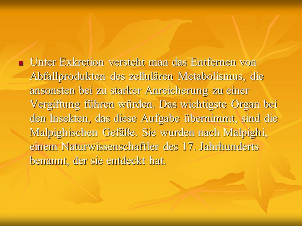 Unter Exkretion versteht man das Entfernen von Abfallprodukten des zellulären Metabolismus, die ansonsten bei zu starker Anreicherung zu einer Vergift