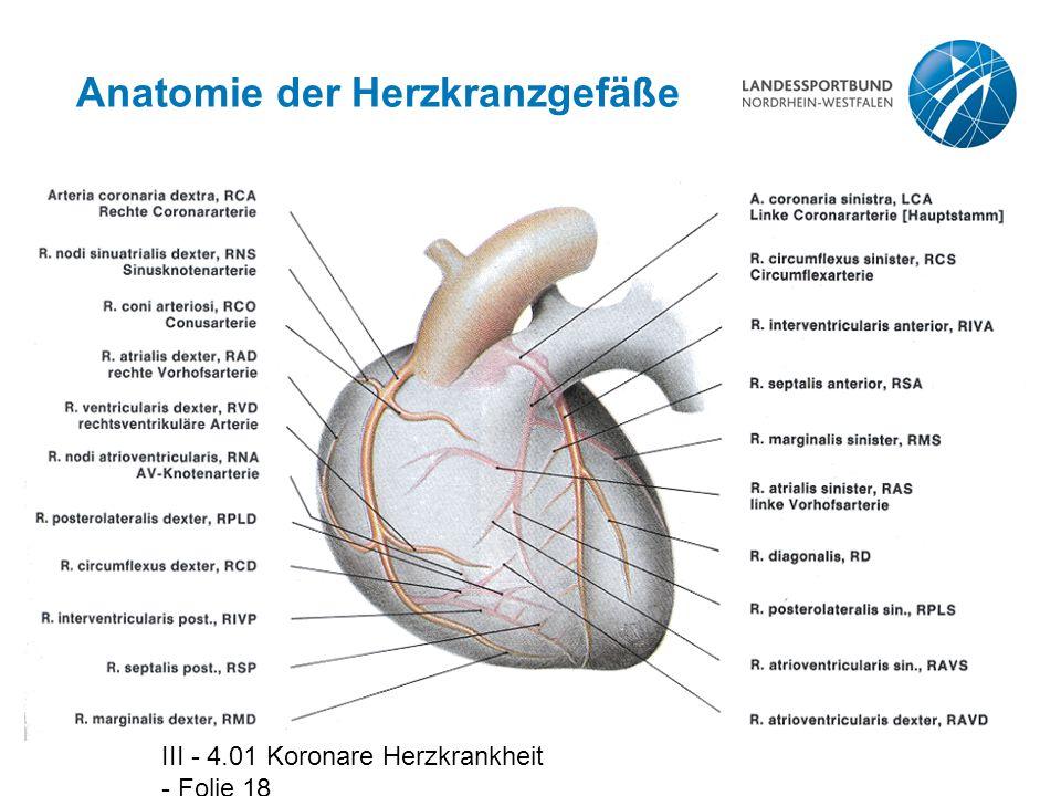III - 4.01 Koronare Herzkrankheit - Folie 18 Anatomie der Herzkranzgefäße