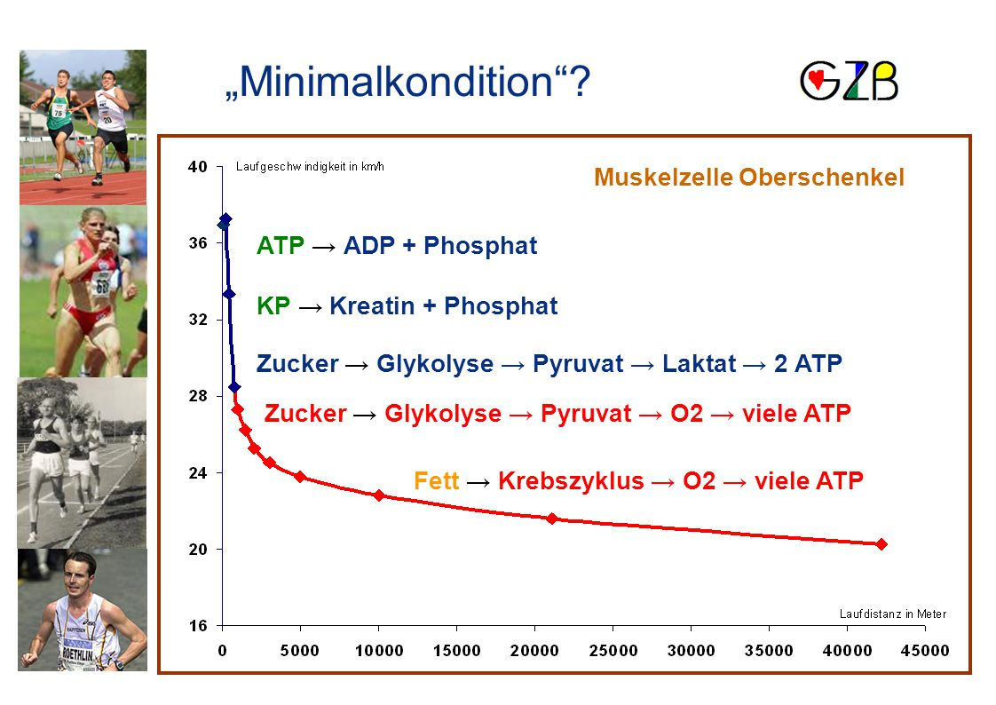 ATP → ADP + Phosphat KP → Kreatin + Phosphat Zucker → Glykolyse → Pyruvat → Laktat → 2 ATP Zucker → Glykolyse → Pyruvat → O2 → viele ATP Fett → Krebsz