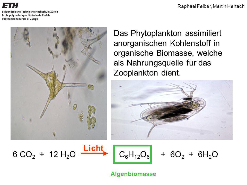 Das Phytoplankton assimiliert anorganischen Kohlenstoff in organische Biomasse, welche als Nahrungsquelle für das Zooplankton dient.