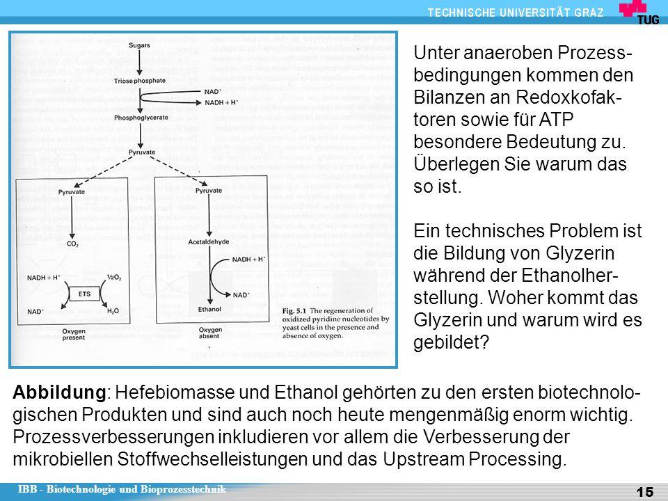 IBB - Biotechnologie und Bioprozesstechnik 15 Abbildung: Hefebiomasse und Ethanol gehörten zu den ersten biotechnolo- gischen Produkten und sind auch