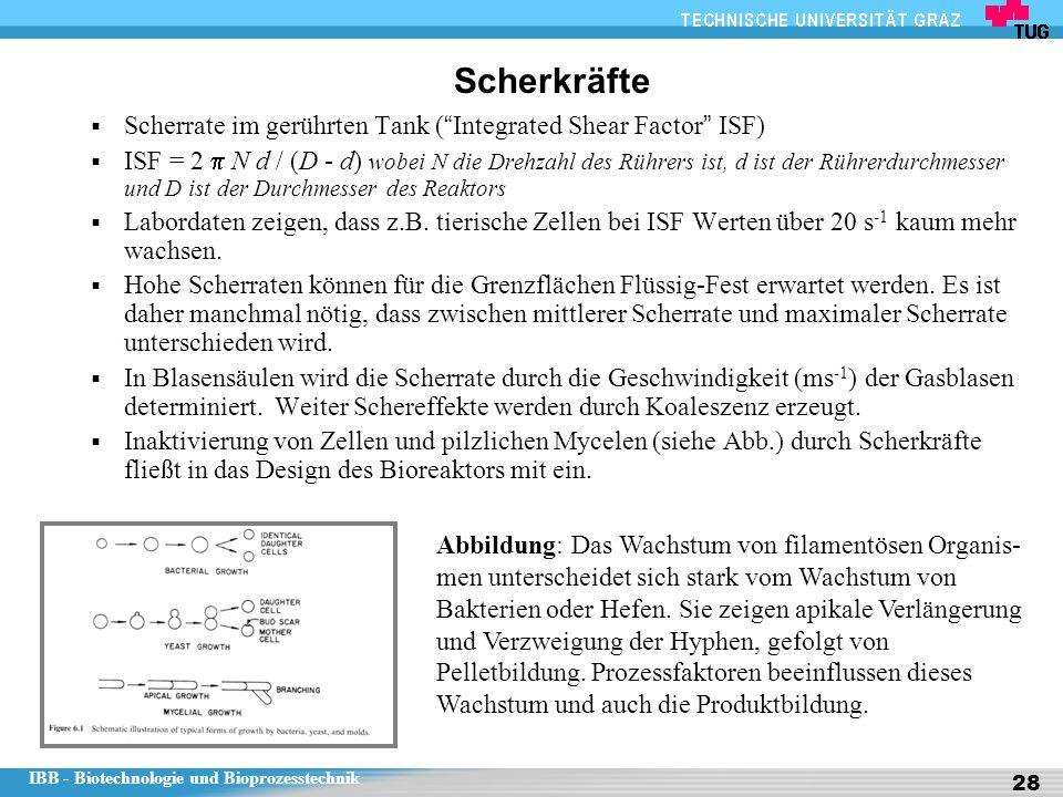 """IBB - Biotechnologie und Bioprozesstechnik 28 Scherkräfte  Scherrate im gerührten Tank ( """" Integrated Shear Factor """" ISF)  ISF = 2  N d / (D - d) w"""