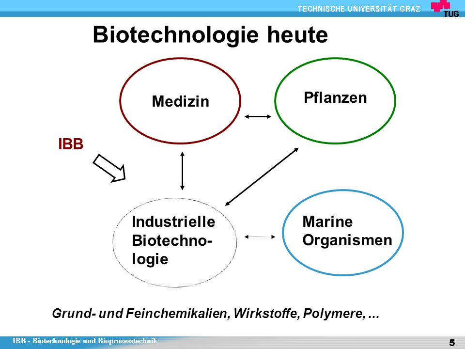 IBB - Biotechnologie und Bioprozesstechnik 5 Biotechnologie heute Medizin Marine Organismen Pflanzen Industrielle Biotechno- logie IBB Grund- und Fein