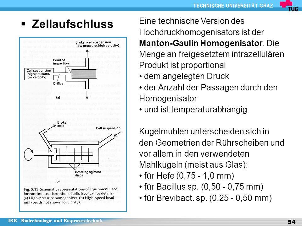 IBB - Biotechnologie und Bioprozesstechnik 54  Zellaufschluss Eine technische Version des Hochdruckhomogenisators ist der Manton-Gaulin Homogenisator