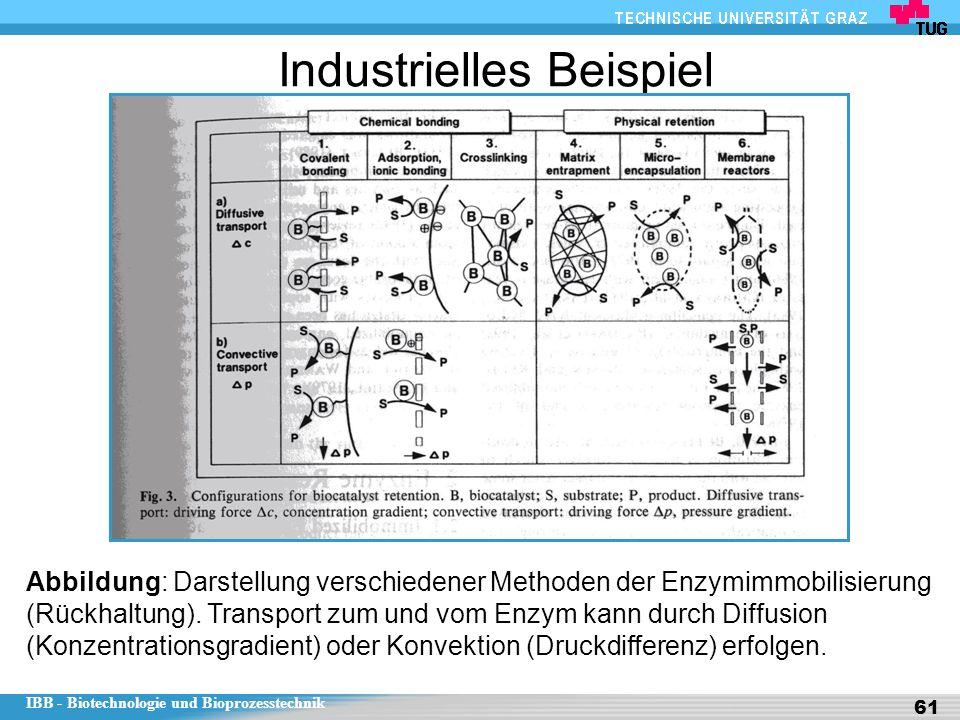 IBB - Biotechnologie und Bioprozesstechnik 61 Industrielles Beispiel Abbildung: Darstellung verschiedener Methoden der Enzymimmobilisierung (Rückhaltu