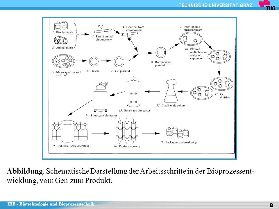 IBB - Biotechnologie und Bioprozesstechnik 8 Abbildung. Schematische Darstellung der Arbeitsschritte in der Bioprozessent- wicklung, vom Gen zum Produ
