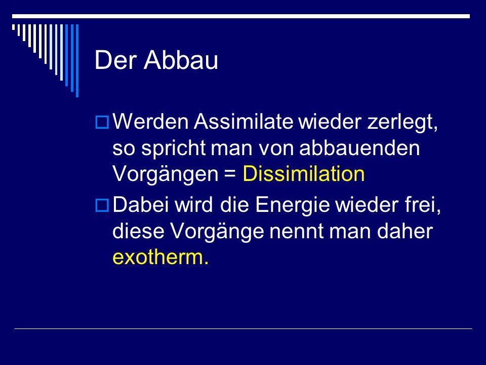 Der Abbau  Werden Assimilate wieder zerlegt, so spricht man von abbauenden Vorgängen = Dissimilation  Dabei wird die Energie wieder frei, diese Vorgänge nennt man daher exotherm.