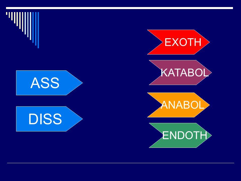 ASS DISS KATABOL ANABOL ENDOTH EXOTH