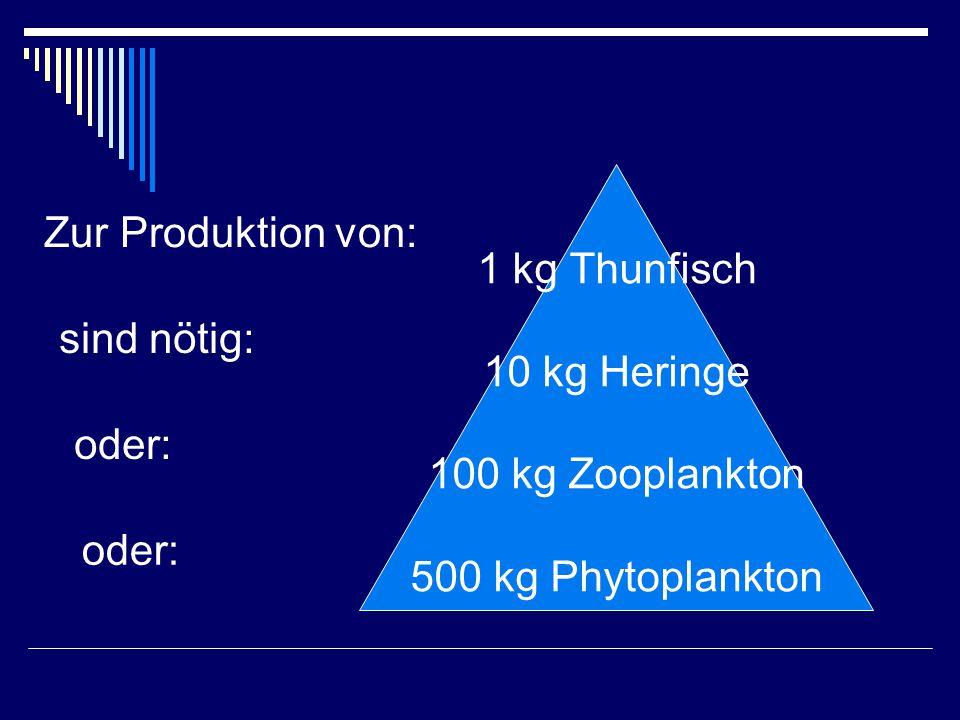 1 kg Thunfisch 10 kg Heringe 100 kg Zooplankton 500 kg Phytoplankton Zur Produktion von: sind nötig: oder: