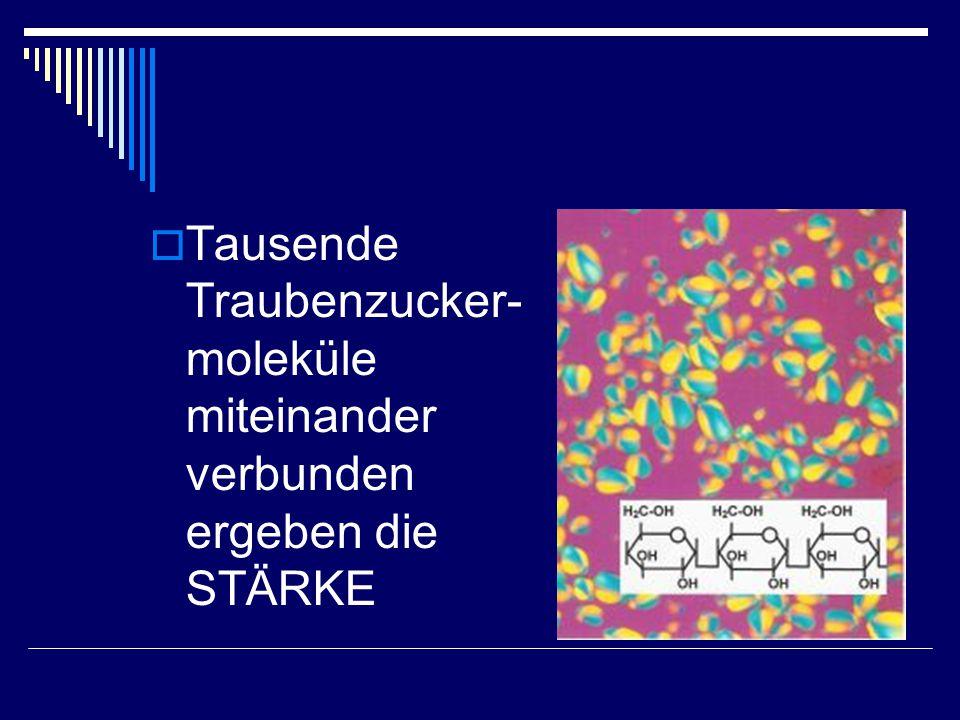  Tausende Traubenzucker- moleküle miteinander verbunden ergeben die STÄRKE